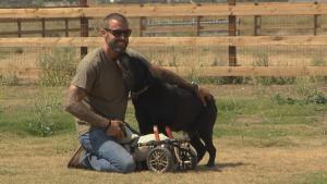 Puppy Love: Salvation Through Rescue Dogs