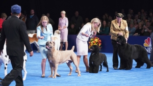 Meet the Stars of the 2018 National Dog Show
