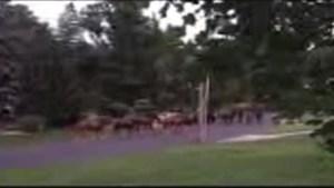 Horses on the Run in NJ