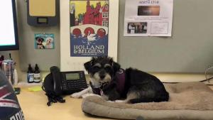 More US Companies Allowing Employees to Bring Dogs to Work