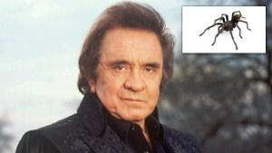 Black Tarantula Named for Johnny Cash