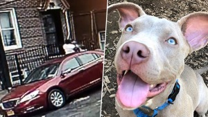 Woman Caught on Camera Choking, Tossing Puppy: SPCA