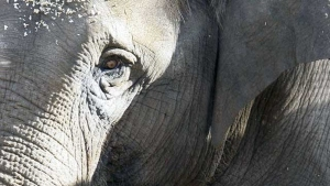 Little Girl Scares Off Elephant in Viral Video