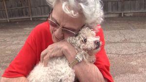Poodle, Stranded 12 Hours in Houston Floods, Reunited with Joyful Owner