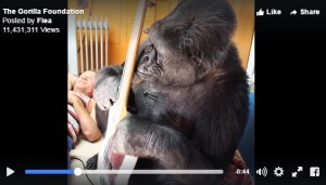 Koko the Gorilla Jams With Flea From Red Hot Chili Peppers