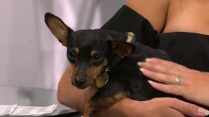 Clear the Shelters: Rocky and Star