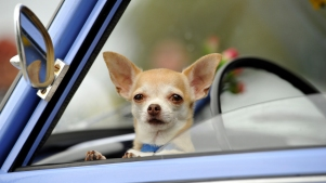 Tips for Traveling Safe With Your Pet