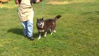 Unbelievable Animals: Stolen Husky Reunited Five Years Later