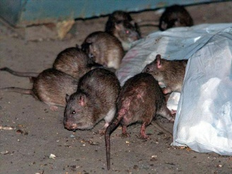 Mouse Virus Kills Montauk Man