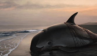 Mexico Says At Most Only 22 Vaquita Porpoises Remain