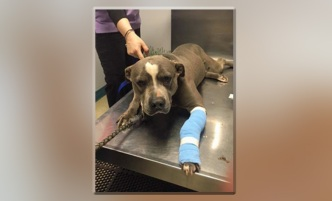 Abandoned, Chained Dog Rescued from Long Island Backyard