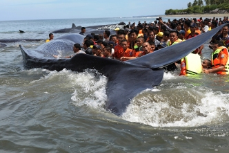 Humpback Whale Spotted in NY Channel: Officials