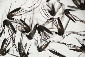 What You Need to Know: Zika Virus Spreads in Americas