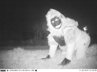 Wolf in High Heels Among Creatures Captured on Trail Cam