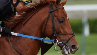 Gun Runner Skips Preakness, Leaving Likely Field of 11