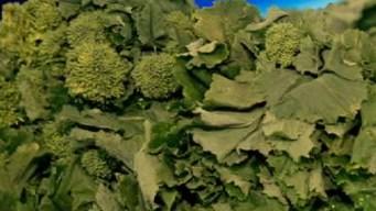Produce Pete: Broccoli Rabe