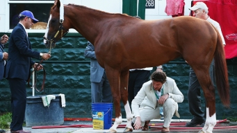 5 Reasons Why California Chrome Lost
