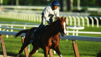 California Chrome Revs Up Bid