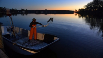 How Climate Change Could Muck Up the Chesapeake's Recovery