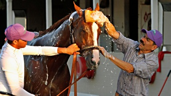 Derby Champ California Chrome Faces Lighter Load