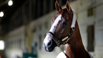 California Chrome's Golden Moment