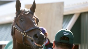 Preakness 2016: Everyone Loves Nyquist, Even His Rivals