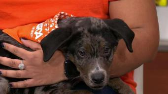Clear The Shelters: Barnaby & Bambam