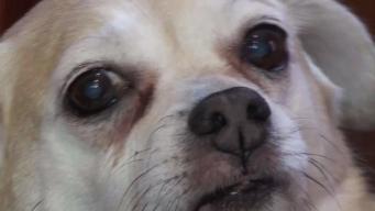 Blanket With Face of Beloved Dog Missing for 3 Months