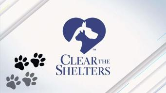Clear the Shelters: National Puppy Day