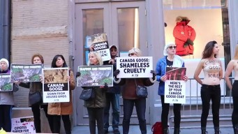'Fur Kills': Topless Protesters Rally Outside NYC Coat Store