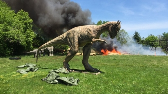 Dinosaur Roasted at Exhibit in New Jersey Park