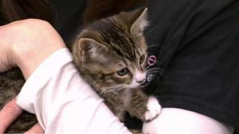 Clear The Shelters: May and June