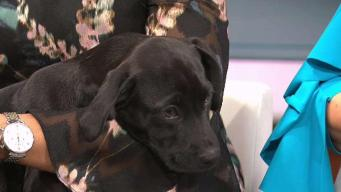 Clear The Shelters: Whitney and Diamond