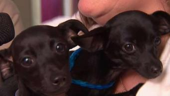 Clear the Shelters Kicks Off On Long Island