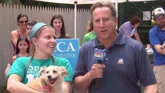 Clear the Shelters: SPCA of Westchester