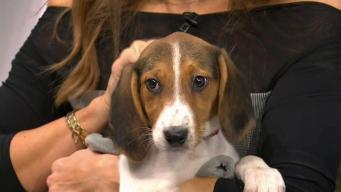 Clear the Shelters with SPCA of Westchester