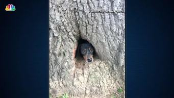 Dog Gets Stuck in a Hole in a Tree