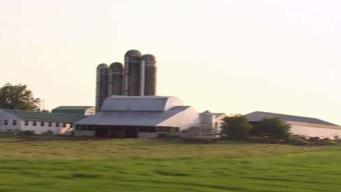 Dairy Farms in NY Rely on Undocumented Immigrants