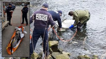Dolphin Found Dead in Westchester County River