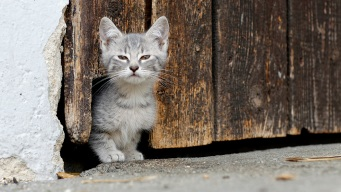 Kitten Survives Car Crash, Weeks Alone Before Reunion