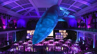 Sleep Under a Blue Whale at Museum's Adult Sleepover