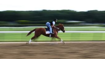Hofburg May Be the Horse to Give Justify a Run for his Money