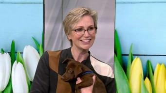 Jane Lynch Chats Clear The Shelters