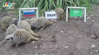 Mystic Meerkats Predict World Cup Outcomes