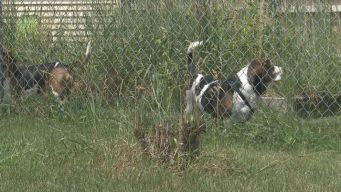 City's 2-Dog Limit Brews Controversy