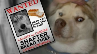 Dog Tries to Steal Bread From Store, Tussles With Employee