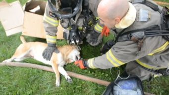 Firefighters Perform CPR on Dog in House Fire