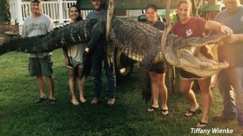 Woman Bags Mississippi's Largest Gator