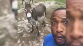 Singing Donkey Hits Viral High Note