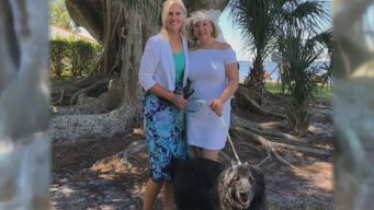 Florida Woman 'Marries' 100-Year-Old Tree, Hoping To Save It